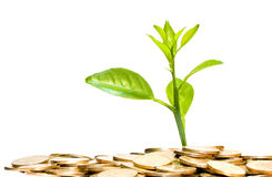 Money grow. Coins and plant, isolated on white background, money grow concept Stock Photography