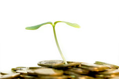 Money grow. Coins and plant, isolated on white background, money grow concept Stock Images