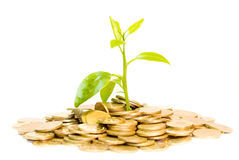 Money grow conception. Coins and plant, isolated on white background, money grow concept Stock Photography
