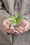 Money growing concept Stock Photography