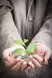 Money growing concept Stock Images