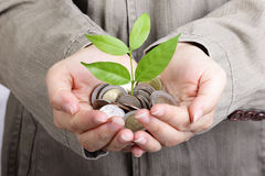 Money growing concept Stock Image