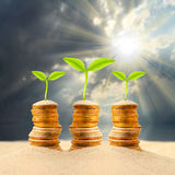Money growing. Stock Photography