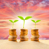 Money growing. Royalty Free Stock Photo