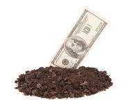 Money growing Royalty Free Stock Photo