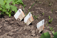 Money growing. Stock Image