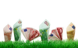 Money growing in grass Stock Photos