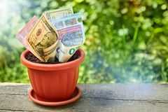 Money Growing In Pot Filled Stock Photos