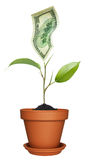 Money growing on plant Stock Images