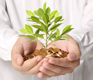 Money growing from plant coins Royalty Free Stock Photography