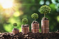 Money growing step with tree and sunrise. concept finance  accounting. Investment plant growth background business green profit success wealth currency chart royalty free stock photos