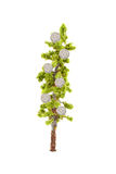 Money growing on tree Stock Images