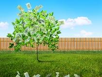 Money growing Stock Photos