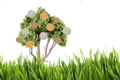 Money growing on tree with grass Stock Photography