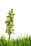 Money growing on tree with green grass royalty free stock photos
