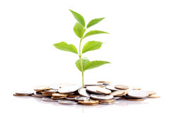 Money grows Stock Photo