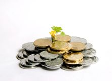 Money grows. A yellow flower and some green leaves grow in the coins money Stock Photos