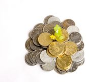 Money grows. A yellow flower and some green leaves grow in the coins money Royalty Free Stock Images