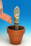 Money grows 2 Royalty Free Stock Images
