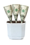 Money grows in a flowerpot Royalty Free Stock Photography