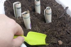Money grows from the ground in a flower pot. Paper bills, folded in a tube, stick out of the ground. There is a tool for cultivati Royalty Free Stock Images