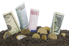 Money grows from the humus  concept Stock Images
