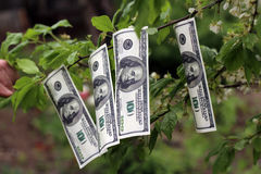 Money grows on tree Stock Photography