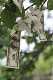 Money grows on tree Stock Photography