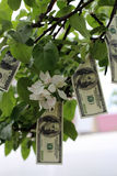 Money grows on tree Stock Images