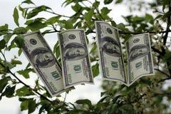 Money grows on tree Stock Photos