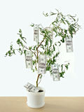 Money grows on trees Stock Photos
