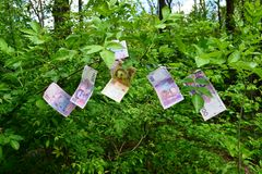 Money grows on trees Royalty Free Stock Photo