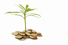 Money and growth Stock Images