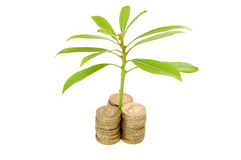 Money and growth Royalty Free Stock Image