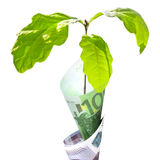 Money growth. Concept color image isolated on a white background Royalty Free Stock Images