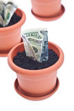 Money growth Royalty Free Stock Photos