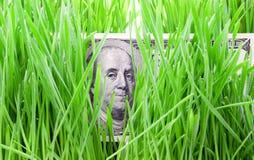 Money Growth Stock Photography