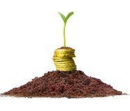 Money growth. Golden coins in soil with young plant. Financial metaphor Stock Images