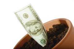 Money growth Royalty Free Stock Photo