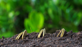 Money growth concept coins in soil Stock Image