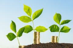 Money growth concept. A money growth concept image Stock Photo