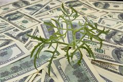 Money growth concept. Plant growing out of heap of money Royalty Free Stock Photo