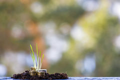Money growth: green grass and stacks of coins. Stock Photos