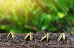 Money growth and rain on top. concept coins in soil Royalty Free Stock Image