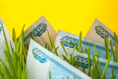 Money growth: ruble bills in green grass. Royalty Free Stock Image
