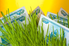 Money growth: ruble bills in green grass. Money grass: russian ruble bills in green grass. Appreciation of russian ruble. Financial concept stock images