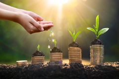 Free Money Growth Saving Money. Upper Tree Coins To Shown Concept Of Growing Business Stock Photo - 163795650