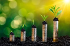 Money growth Saving money. Upper tree coins to shown concept of growing business. Money growth Saving money Upper tree coins to shown concept of growing business royalty free stock photography