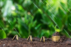Money growth, seedling and rain on top. concept coins Royalty Free Stock Photo