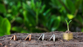 Money growth, seedling on top. concept coins Royalty Free Stock Photo